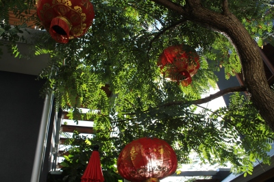 Chinese Lanterns in Trees